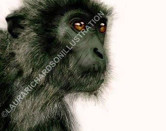 Silvered Leaf monkey, Borneo Wildlife, Giclee Print, Illustration, Hand drawn