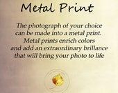 Metal photo print, metal photo wall art, photo print option, wall art option, rustic home decor, fine art photography