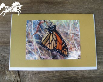 MONARCH BUTTERFLY CARD -  5.5 by 8.5 Inch [Large] Notecard on Dark Mustard Yellow Card Stock, Nature Photograph Notecards, Butterflies Cards