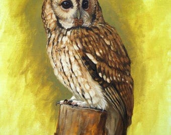 Original wildlife art animal art bird art bird painting Tawney Owl original oil painting by H Irvine
