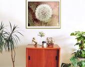 Dandelion Wall Art, Dusty Pink, Flower Wall Art, Girls Room, Feminine, Flower Art Photography, Surreal Floral Print, Fine Art