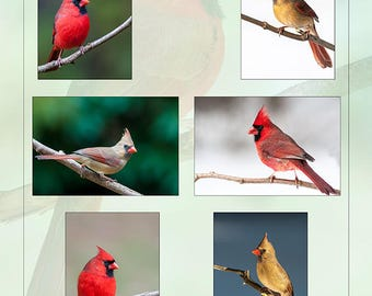 Cardinal collage Gift idea Christmas Holiday gift nature Avian
