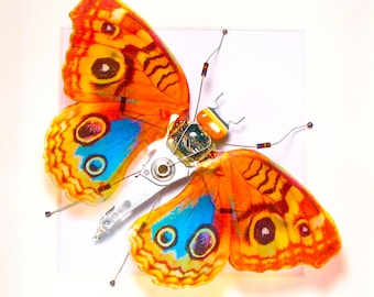 Orange Butterfly Art Butterfly Wings Electrickery Bug Mother's Day Gift For Her Steampunk Butterfly Geek Gift Taxidermy Framed Butterfly