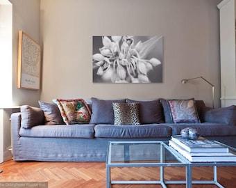 11x14 to 24x36 Fine Art Black White Photographic Print, Abstract Flower, Auburn, Alabama