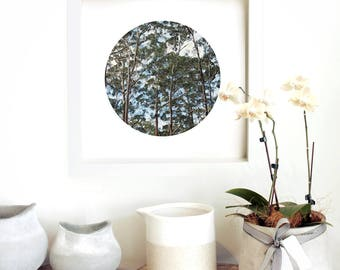 Karri Forrest | Artwork | Art | Print | Art Prints Unframed | Nature | Landscape | Australia