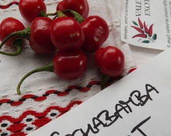 Ají Cochabamba Chili Pepper, 10 seeds