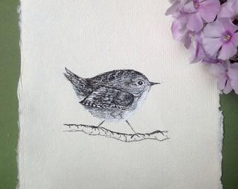 Wren, Ink Drawing