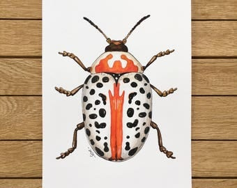 Spotted Beetle, Original Watercolor Illustration, A5 size