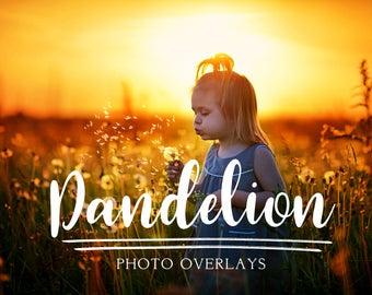 32 Dandelion Dreams Photo Overlays