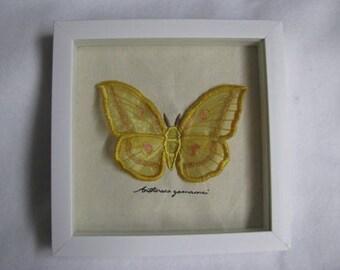 Organza Japanese Silk Moth Winged Curiosity Specimen Shadow Box