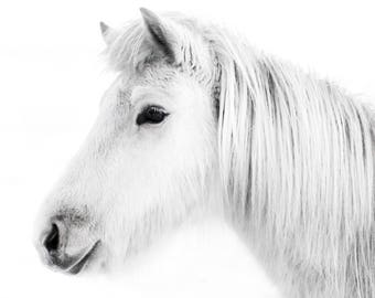 White Horse Profile/ Home Decor/ Gift/ Travel /Print / Wall Art / Unique/ Animal/ Horse/ Adventure/ Wanderlust / Digital /Fine Art/ Iceland