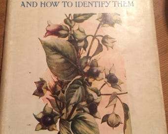 Medicinal Herbs and how to identify them RichardMorse