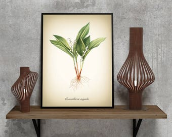 Botanical Art Print - Vintage Botanical Print - Convallaria majalis Illustration Print - Redoute' Botanical Print - Lily of the Valley print
