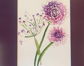 Alium Blooms