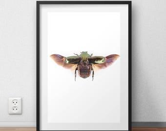 winged beetle- nature wall art- insect art print- entomology-photo gifts-home decor- wall art-