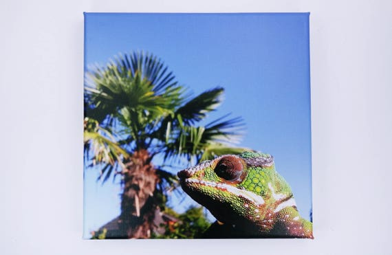 Image Chameleon with Palm-Panther chameleon-photography art print on canvas 20 x 20 cm Print wall decoration art-blue sky
