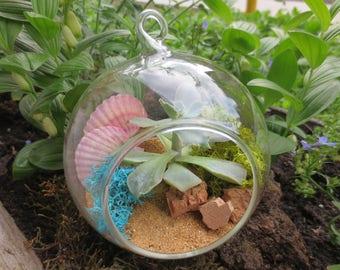 Ocean succulent terrarium/Themed Succulent Terrarium/Hanging glass terrarium