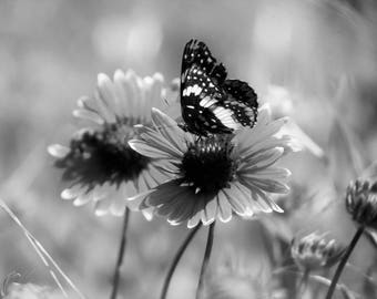 Photo Print | Wall Art | Canvas | Butterfly | Black and White | Blanket Flower | Macro Photography | Home Decor | Wall Hanging |