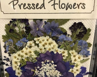 Large blue, purple flowers with greenery.