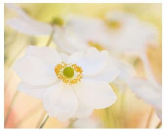 flower photography, white flowers, peach, nature photography, flower wall art, floral art print, romantic home decor, fine art photography