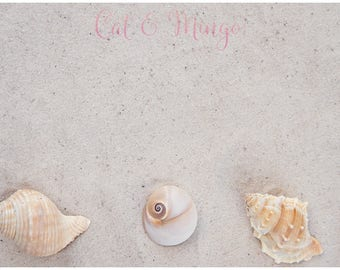 Sand and Sea Shells   Styled Stock Photography
