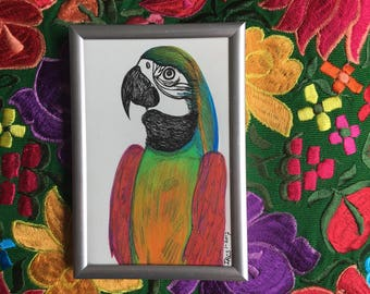 Bohemian Parrot - Handdrawn Illustration - Colored Pencils