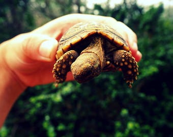 Turtle Life | South Africa Travel Animal Photography, Fine Art, Wall Art, Home Decor, Print