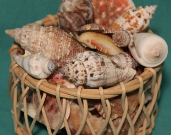 Basket of Seashells ~ Various Shapes and Sizes ~ Beautifully Colored ~ Wicker Basket ~Home - Bathroom Decor ~Crafting ~Accents~ Collectible
