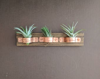 Air Plant Wall Plaque with Copper Holders and Three Air Plants (Tillandsia)