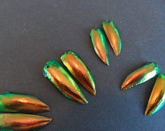 Egypt (pair) beetle wings amber, golden green hem