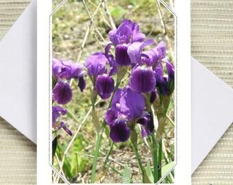 150. Purple iris.