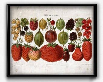 Strawberries Fruit Vintage Print - Strawberries Poster - Strawberries Art - Kitchen Decor - Strawberries Art - Kitchen Decor