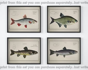 Fish prints, Set of 4 prints, Nautical print, Vintage art poster, Fish art prints, Antique animal print, Printable wall art, 11x14, 8x10