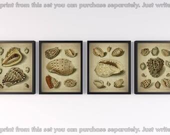 Vintage nautical prints, Set of 4 prints, Dictionary page art, Antique sea shells illustration, Print for wall, Set of 4 wall art, 8x10 JPG