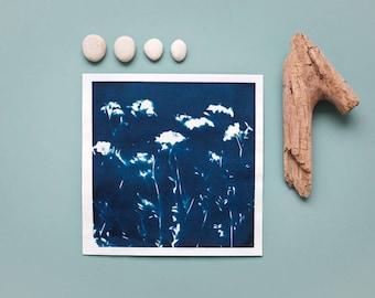 """Original Cyanotypie """"Wiesen-Schaumkraut"""" auf Hahnemühle Skizzenpapier im quadratischen Format (21 x 21 cm)"""