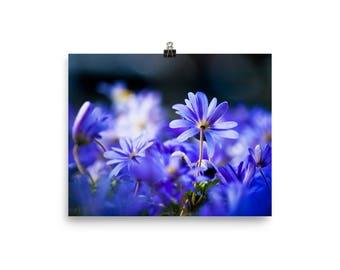 Happy Blue flowers