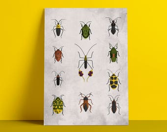 Beetles 3 poster
