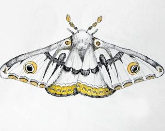 Moth art - biology gift, entomology, scientific illustration, fine art print, watercolor painting