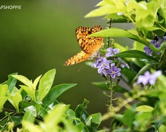 Nature | Butterfly |