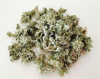 Lichen, Moss, Moss, MOSS dried terrarium Moss terrarium, terrarium, dried moss, diy, gray Moss terrarium supply