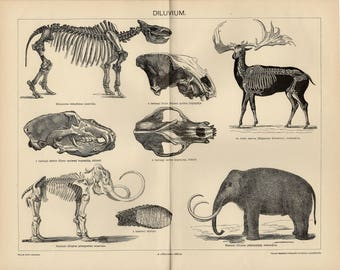 Antique engraving of the Pleistocene megafauna from 1893