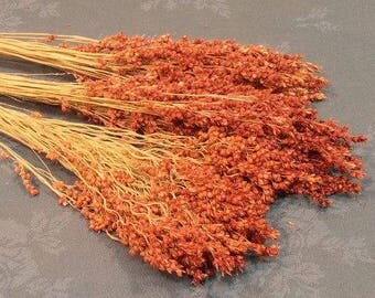 Broom Corn - Red or Black | Dried Plants | Natural Decorations