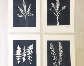 Set of 4 botanicals, Original prints, gray botanicals, modern botanicals, fern botanicals, lady fern, fern art, Plant prints, 11x14 prints