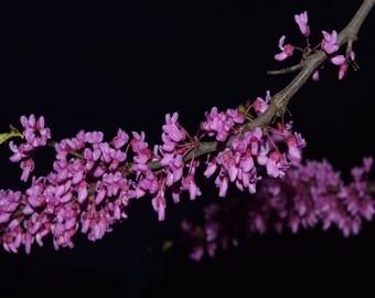 Blossom Tree Branch