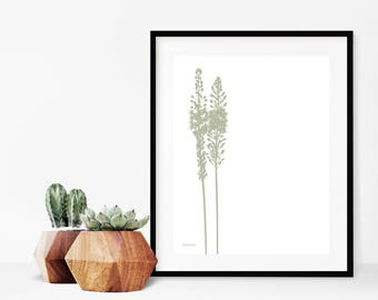 Squill Plant, Digital Download Botanical Wall Print, Home Decor Printable Art, Botanical Art, Minimalist Wall Decor, Modern Graphic Art