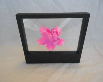 3D Display Floating Frame, Display Case, Shadow Box, Excellent for Jewelry, Shells, Stones, Coins, Flowers collected
