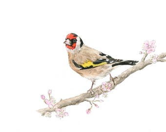 SOLD Goldfinch Original Watercolour Painting