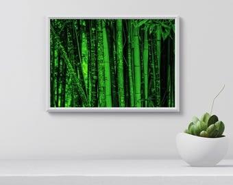 Bamboo Wall Art, Tropical Print, Bamboo Poster, Large Modern Print, Digital  Download