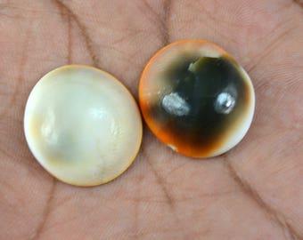 48.35 Ct. Natural Untreated Shiva Eye Shell Pacific Cat's Eye Gemstone Pair