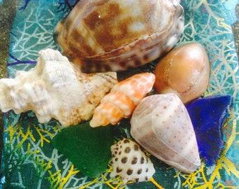 Haleiwa Sea Shells 1